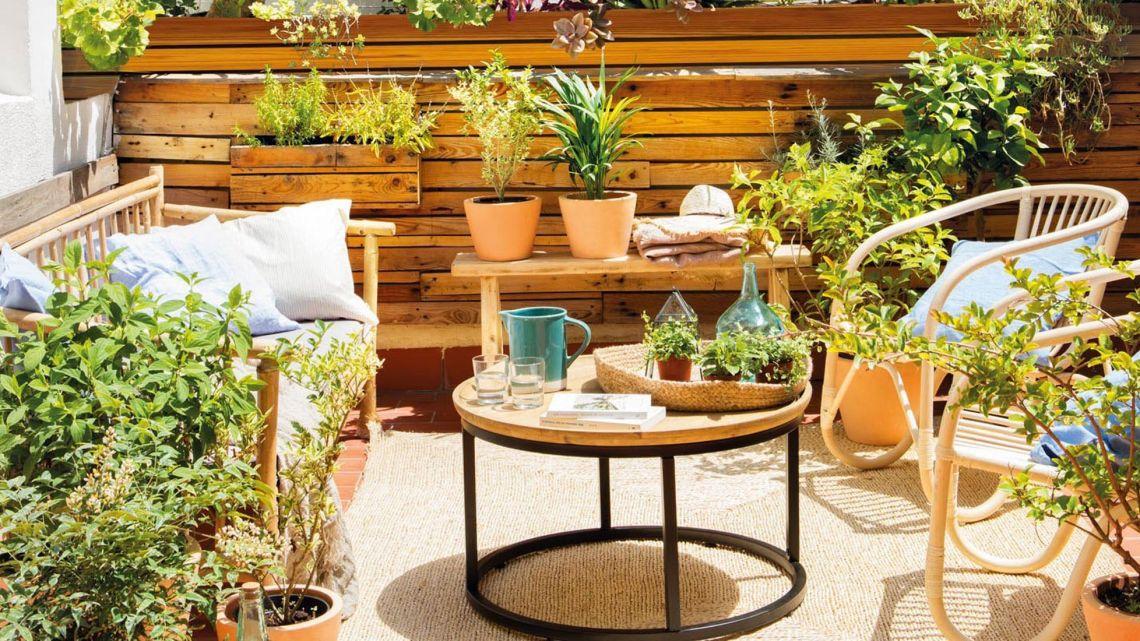 Marie Claire Tips Para Cuidar Tus Plantas En La Ciudad