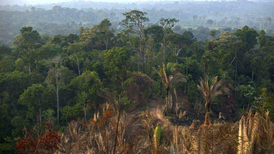 """Brasil no quiere """"consejos globales"""" sobre su selva amazónica."""