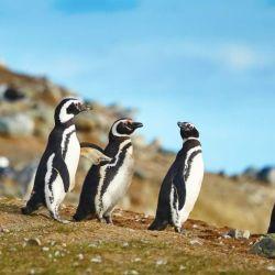En Puerto Deseado se encuentra una colonia de pingüinos fascinante.