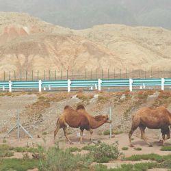 En el desierto de Tamaklán, los camélidos eran mi única compañía.