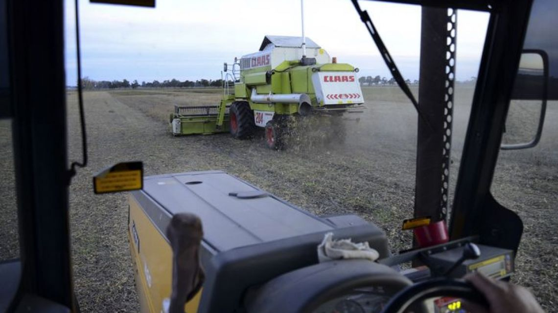 Farmers operate combines during harvest.