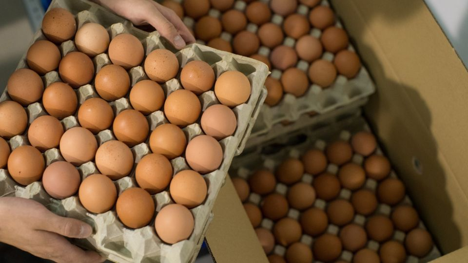 Europe Faces `Sky High' Egg Prices After Contamination Scare