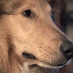 Dylan, el perro influencer de Alberto Fernández