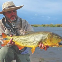 Uno de los buenos dorados del segundo día, pescado de vadeo en los cortes de los terraplenes.