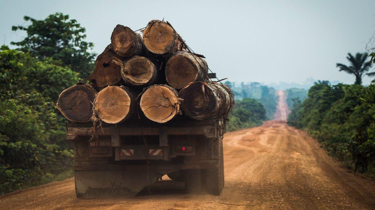 Una de las áreas más afectadas fue la Floresta do Jamanxim, ubicada cerca de la carreterra Transamazónica BR-163, que es objeto del desmonte causado por traficantes de maderas.