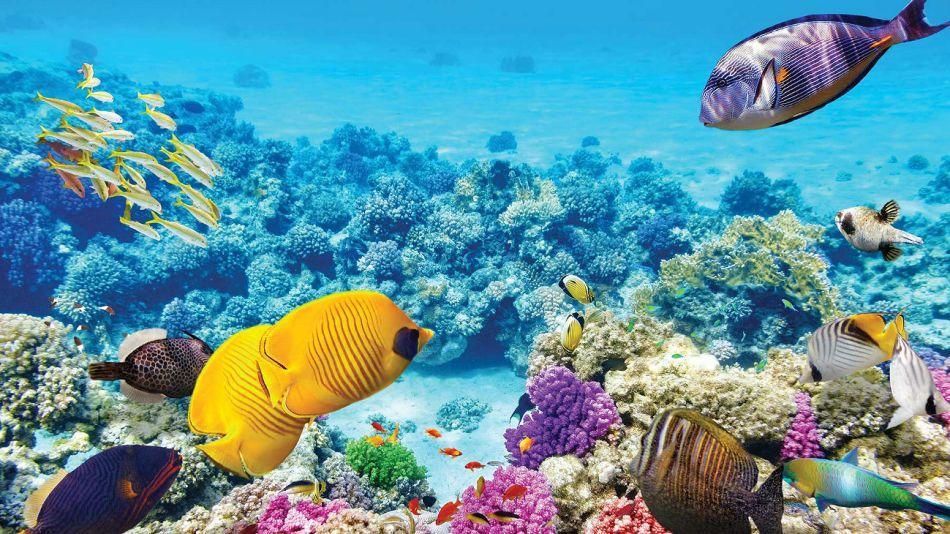 Uber se lanza a los corales.