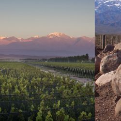 La mineralidad de los suelos en los vinos argentinos