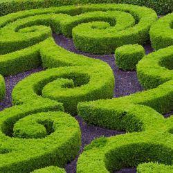 Arbustos de formas geométricas en el jardín del castillo de Brécy.