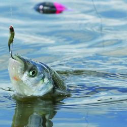 En Los Pampas se pesca bien durante todo el día.