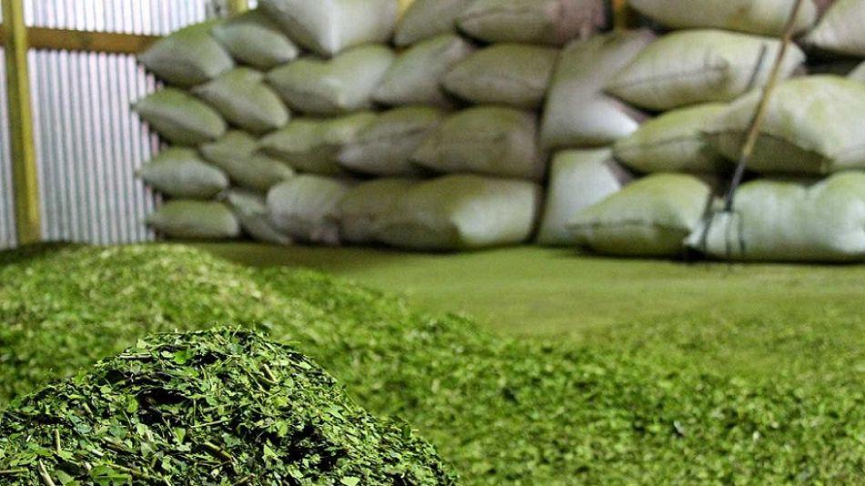 YERBA MATE. 9,96 millones de kilos se exportaron durante el período enero – abril de 2019.