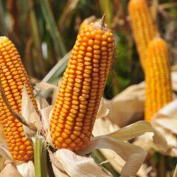 foto-don-mario-semillas-1-1-1