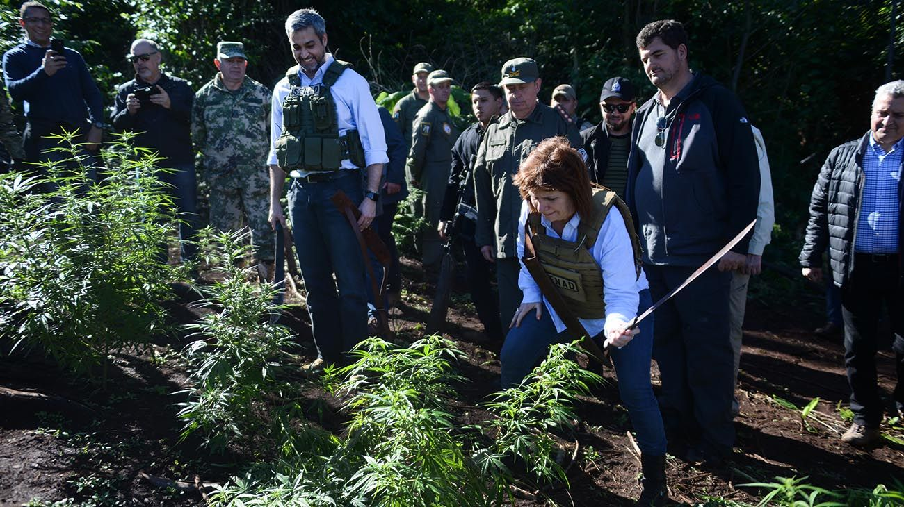 Patrcia Bullrich y el Presidente de Paraguay recorren plantaciones de marihuana en la ciudad de Pedro Juan caballero
