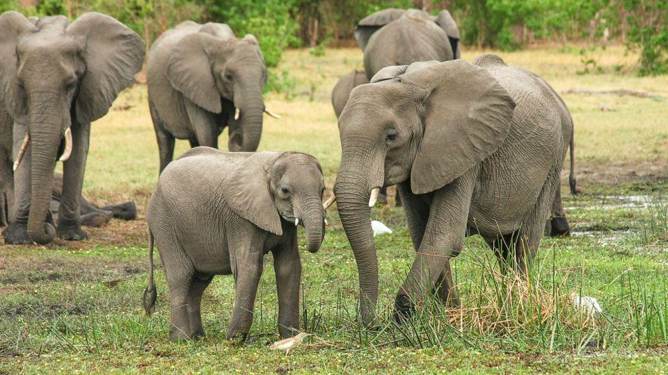 elefantes botswana pixabay