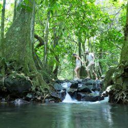 Un viaje a través de un verde salvaje: La isla Moorea está cubierta de jungla.