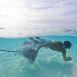 Se puede bucear en el mar con Dasyatis.