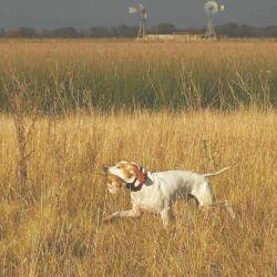 Sin un buen perro, la tarea de marca y recupero es casi imposible.