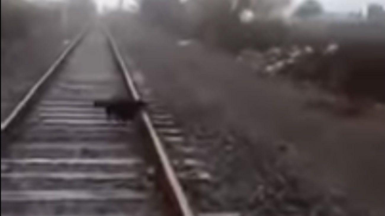 El perro estaba atado con cadenas a la vía del tren
