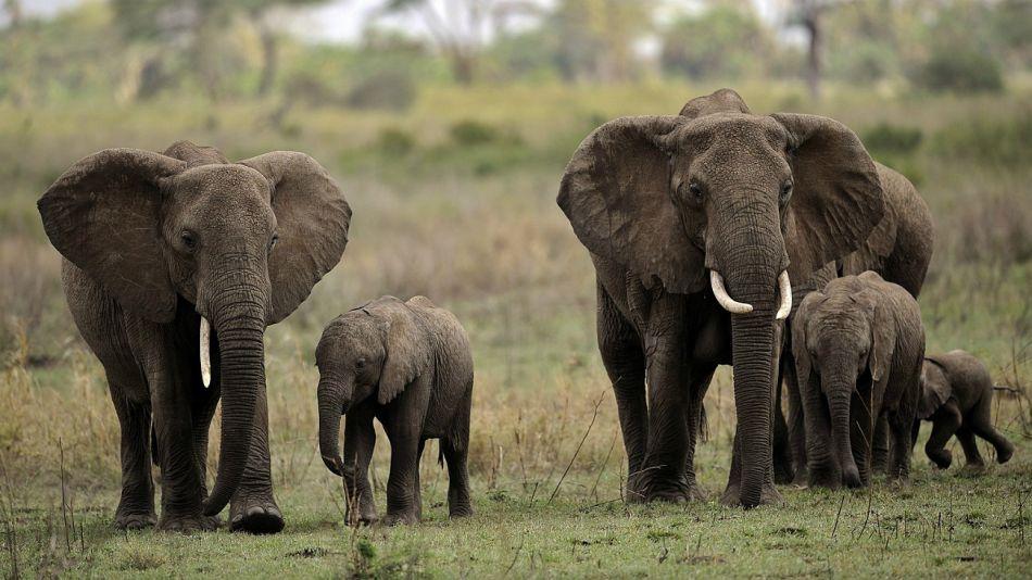 Elefantes en Zimbabue.