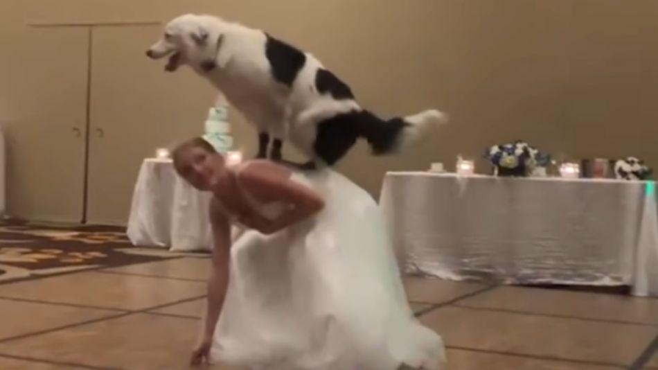 casamiento perro 06282019