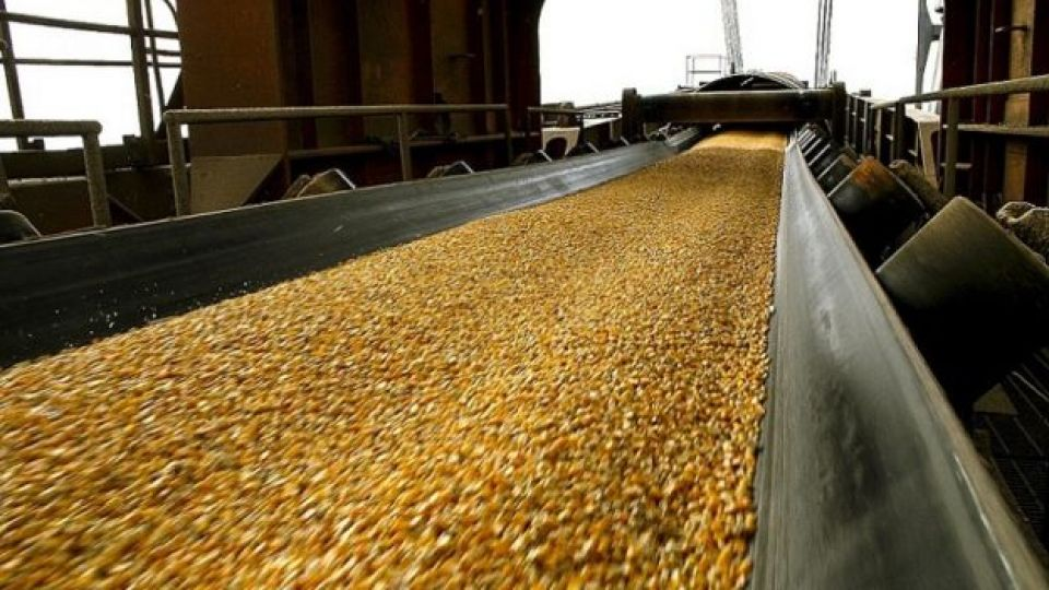 La campaña de maíz termina con un récord de 57 MM tn.