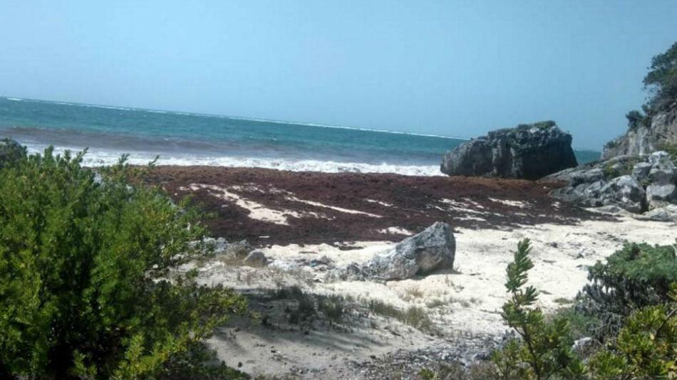 El sargazo afectó varios puntos del Caribe como México, Barbados, Guadalupe y Bonaire.