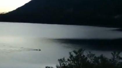 ciervo lago 07102019