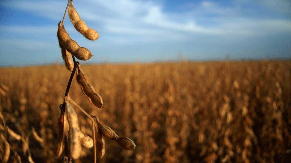 Suben las retenciones de derivados de soja y bajan economías regionales.