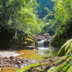 En Jujuy, una selva única crece al oriente de los Andes justo bajo las planicies de altura de la Puna: las yungas
