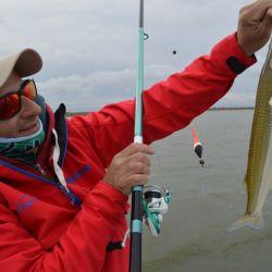 Las mejores capturas se dieron a 40 cm de la superficie, combinando una mojarra grande con un filete de dientudo colgando del anzuelo.