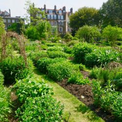 Escondido en pleno barrio residencial está el Chelsea Physic Garden de Londres.