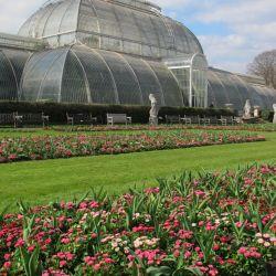Plantaciones de una prolijidad asombrosa. Así son los Kew Gardens de Londres.