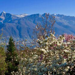 Plantas, Alpes, el Lago Maggiore. Qué mejor sitio para visitar que el jardín botánico del Tesino.