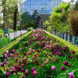 El jardín botánico de Leiden, el más antiguo de Holanda.