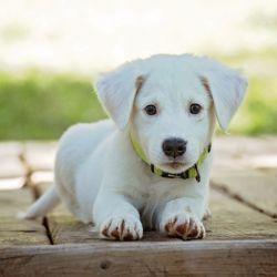 Dogzam se encargará de obtener rápidamente todas las características y datos de cualquier raza e identificar la de tu perro.