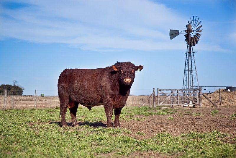 Acordaron los certificados para la exportación de semen de toros y embriones de ganado mayor.