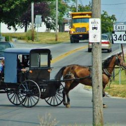 Normalmente no se usan automóviles en las comunidades amish, sino unos pequeños carros tirados por caballos: los famosos buggies que salen en las películas.