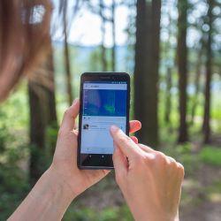 Las grabaciones se visualizan en la pantalla para poder distinguir el canto del ave de otros sonidos ambiente.