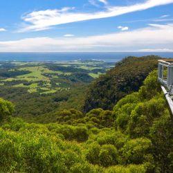 Illawarra Fly Treetop, a 25 metros del suelo, este paseo discurre por las copas de los árboles de las frondosas tierras del sur de Australia.