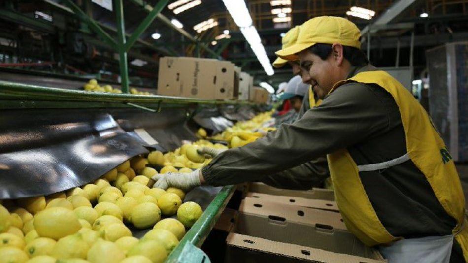 Se envió primera carga de 24 toneladas de limones a India. Se concretó la gestión que empezó el Gobierno en febrero.