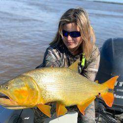 Hermoso dorado en manos de una joven y entusiasta pescadora que, luego de sacarlo, lo devolvió sano y salvo a su medio natural. Pescado con una mojarra de media agua que tomó a mitad de camino. Seguro rondaba los cinco kilos de peso.