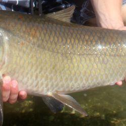 Capturaron un pez que nació antes de la Primera Guerra Mundial