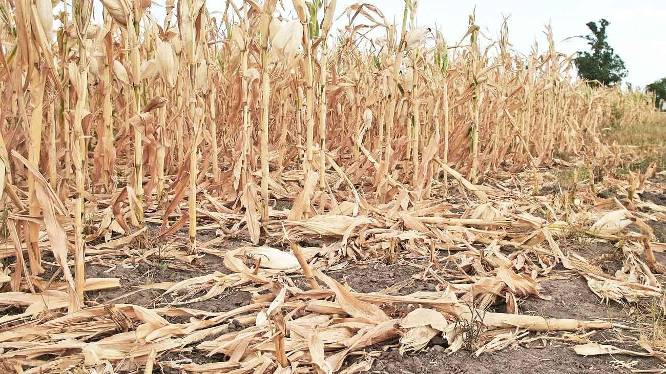 Emergencia. Entre 2017 y 2018, por los efectos de la sequía se perdieron 112 mil millones de pesos en el país.
