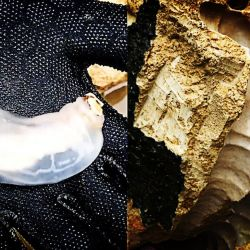 Un equipo internacional de científicos ha encontrado lombrices que comen piedras en la isla filipina de Bohol.