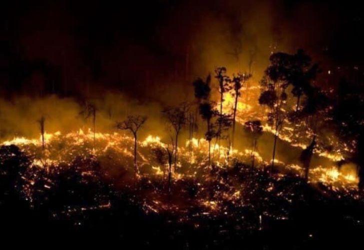 Resultado de imagen para bosque en llamas brasil