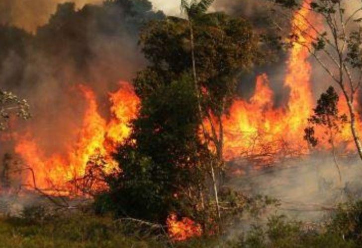 Resultado de imagen para Amazonia incendiada