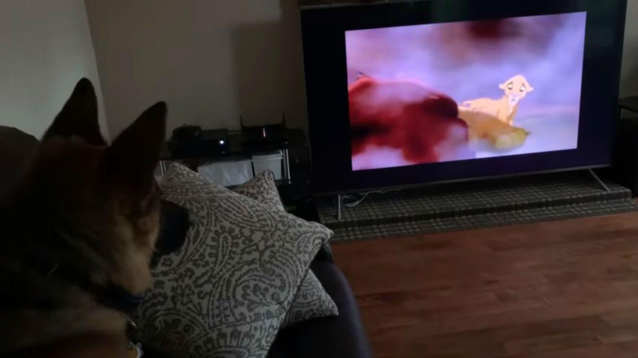 """La reacción de un perro al ver la muerte de Mufasa en """"El rey león"""" enternece a la red"""