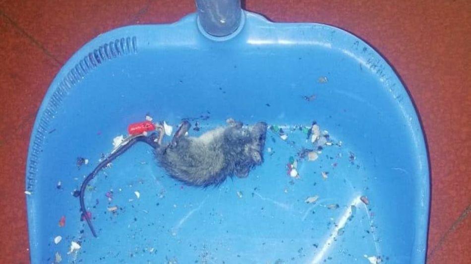 ratas escuela belgrano 08102019