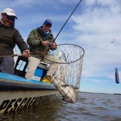 Varios fueron los dobletes realizados por los pescadores, que usaron líneas corredizas y brazoladas de un metro de largo.
