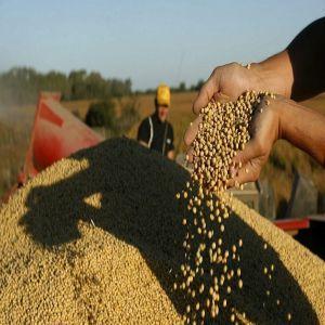 En 2016 el oficialismo presentó una propuesta. Pero la gran novedad fue la presentación de proyectos por parte de una entidad de productores, la Federación Agraria Argentina (FAA), y una cámara empresarial semillera, la Asociación de Semilleros Argentinos (ASA).