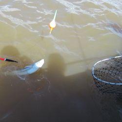 Al tirar las líneas nos encontramos con un viento del sector suroeste de unos 15 km/h, que generó que el río esté bien movido y el agua oxigenada, ideal para la pesca de pejerreyes.